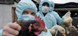 Vtáčia chrípka – zrušenie opatrení !