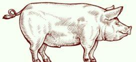 Oznam pre neregistrovaných chovateľov ošípaných !!!